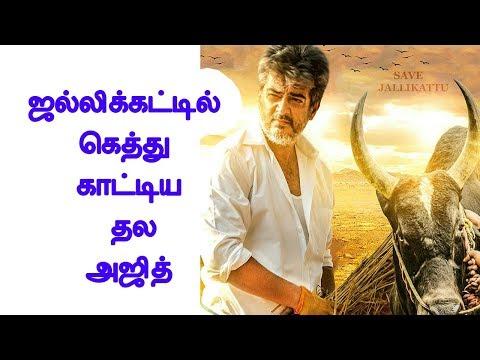 ஜல்லிக்கட்டில் கெத்து காட்டிய தல அஜித்   Tamil cinema news   Cinerockz