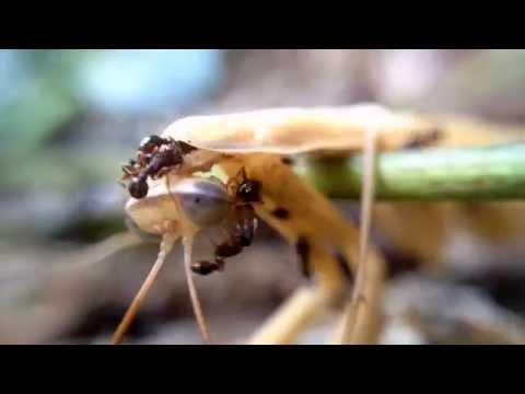 The Death Of A Pray Mantis (R.I.P. ZORAK)