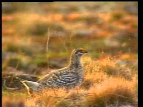 Discovering  -  rip current sensor-turkey hunt