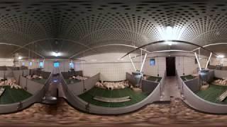 360° WIRTUALNA WYCIECZKA PO GOSPODARSWIE / 360° VIRTUAL EXCURSION ON PIG FARM POLAND