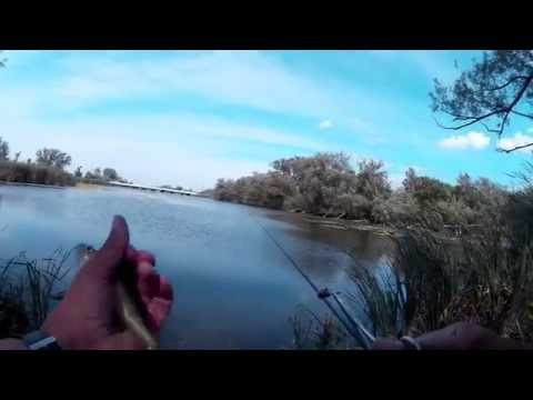 Perch Fishing with a 13' Telescopic Fixed Line Fishing Pole