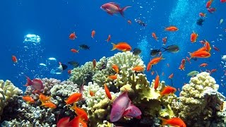 Фантастическая красота подводного мира