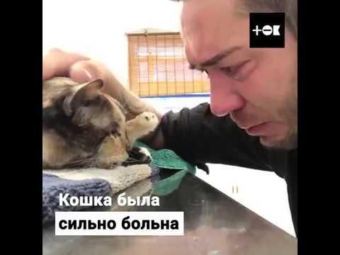ТОК  Этому человеку пришлось усыпить любимую кошку из за