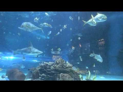 Budapest Aquarium