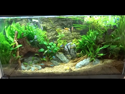 38 gallon planted community aquarium august new fish and for 38 gallon fish tank