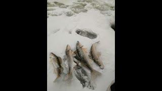 Зимняя рыбалка Кама выход судака на прыщь местечко Коневая грива