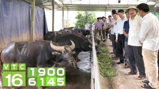 Tỷ phú Việt giàu đáng kinh ngạc nhờ nuôi trâu, bò | VTC16