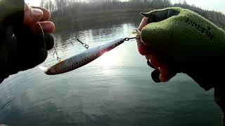 Рыбалка на щуку Хищник гоняет малька и игнорирует приманку НО