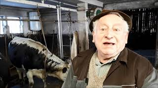 Vosges : Jean Wehrey parle de la vache vosgienne