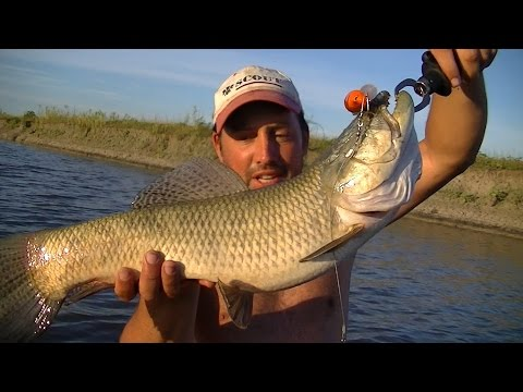 TV Nº202 15-01-2016 Pesca de tarariras en el Rio Samborombon, con carnadas y artificiales