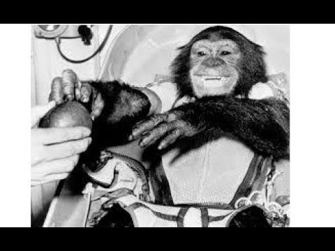 The Clarey Test on Ham the Chimp