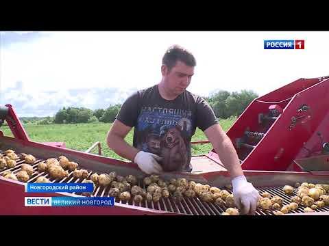 ГТРК СЛАВИЯ Фермер Пиреев уборка первого урожая картофеля 15 07 20