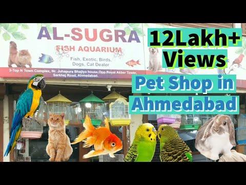 Pet shop in Ahmadabad, Gujarat. Persian cat, Exotic birds, Ducks, Turkey, Cockatoo, Budgies, Chicken
