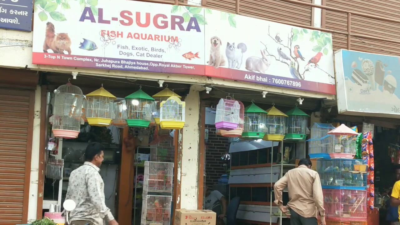 Pet shop in Ahmadabad, Gujarat  Persian cat, Exotic birds, Ducks, Turkey,  Cockatoo, Budgies, Chicken