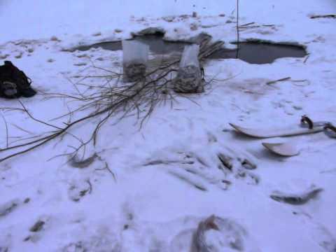 видео: рыбалка без удочки в Сургуте