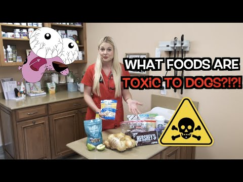 What Foods Are Toxic To Dogs?! | Human Food Can Kill Dogs!!