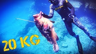 spearfishing adventures 21: The Great Dusky - 20kg