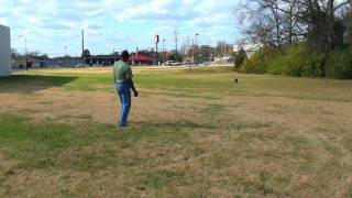 Guy Nashville Dog Trainer 055: Advanced Obedience, Training A Dog To Come Off Leash