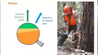 Chainsaw tree falling -- Module 2 Section 6 -- Falling away from the natural lean
