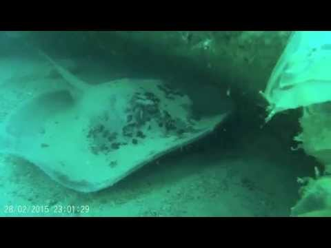 Boom Wreck Diving with BISS marine Bahrain