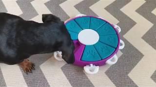 강아지 장난감 - 니나오토슨 레벨3 도그 트위스터