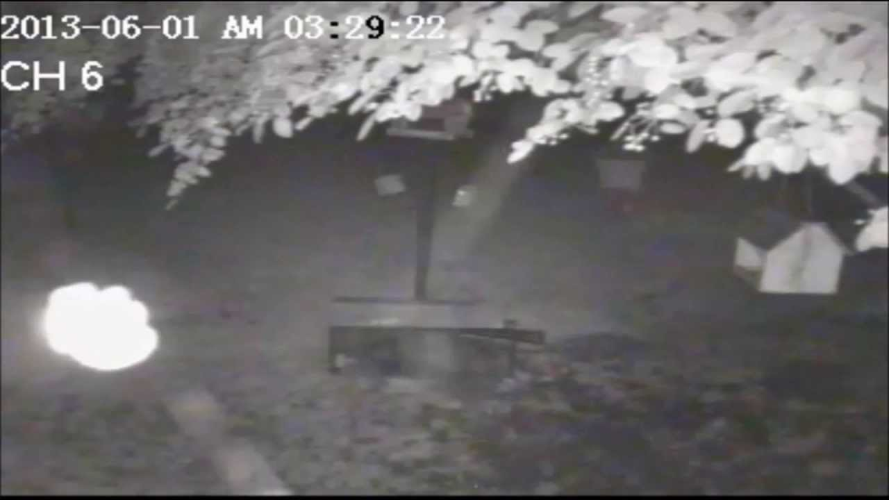 Spider Building Web on Home Security Camera at NIGHT with
