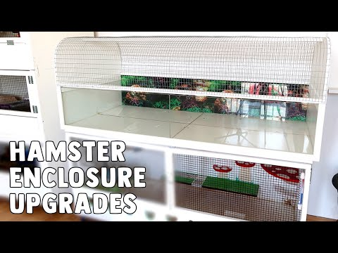 Finally Upgrading My Large Hamster Cage | The Petri Dish (Billy XL)
