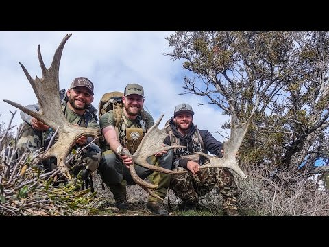 SHED HUNTING WITH HUSH AND CHAD MENDES