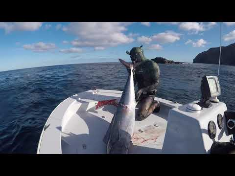 Spearfishing Norfolk Island 2017, August is back and so are the wahoo...