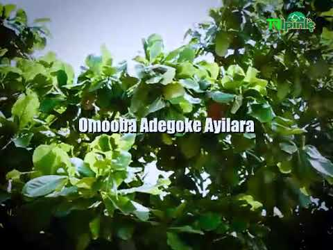 Download Prince adegoke Ayilara Covid 19 song