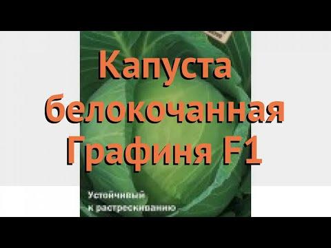 Капуста белокочанная Графиня F1 (grafinya f1) 🌿 обзор: как сажать, семена капусты Графиня F1