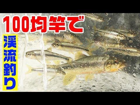 田舎の川で100均竿で釣る!