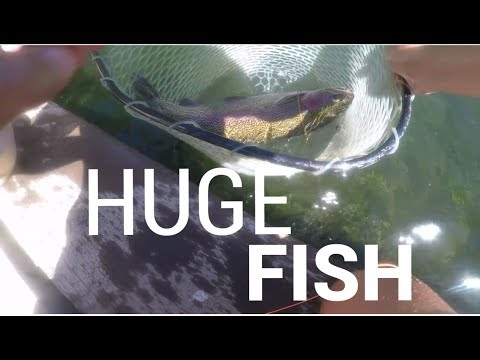 SHASTA MOUNTAIN GIANT TROUT (FLY FISHING MUST WATCH)