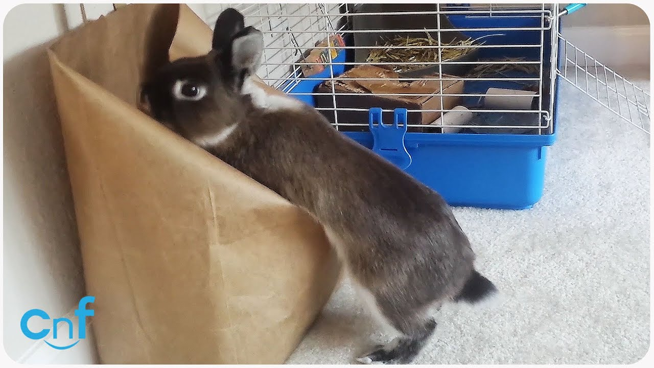 Bunny Searches for Backpack | Carrot Carrying Case