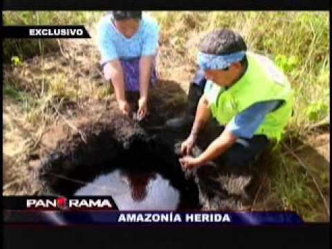 Amazonía herida - Panorama