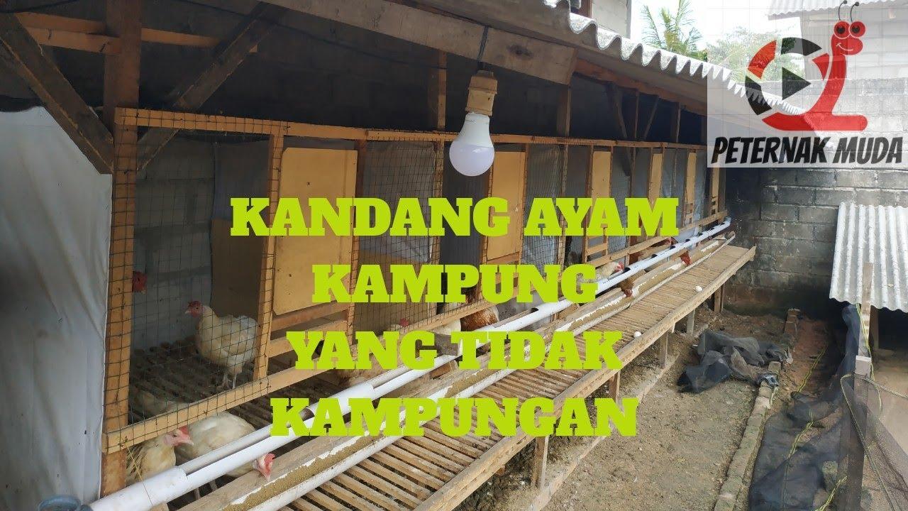 Kandang Untuk Indukan Ayam Kampung Yang Tepat Youtube Cara membuat kandang ayam kampung