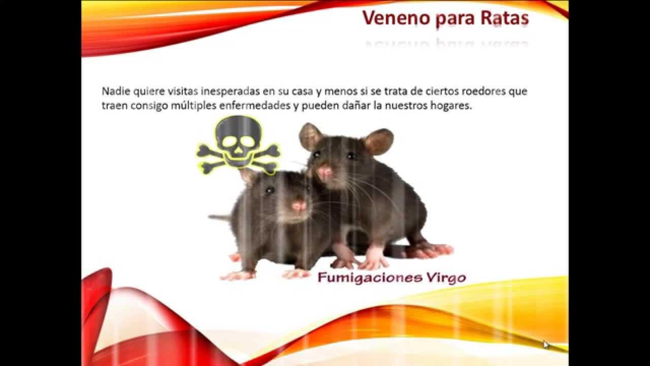 Veneno para ratas youtube - Mejor veneno para ratones ...