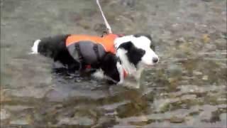 先週のリベンジ。川遊びです。 父ちゃん追いかけ流される。 父ちゃん!...