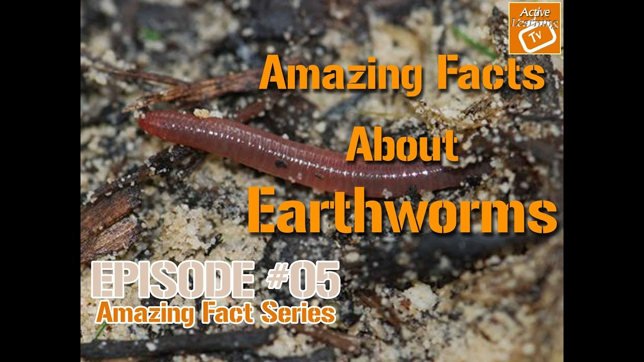Amazing Facts About Earthworms - YouTube