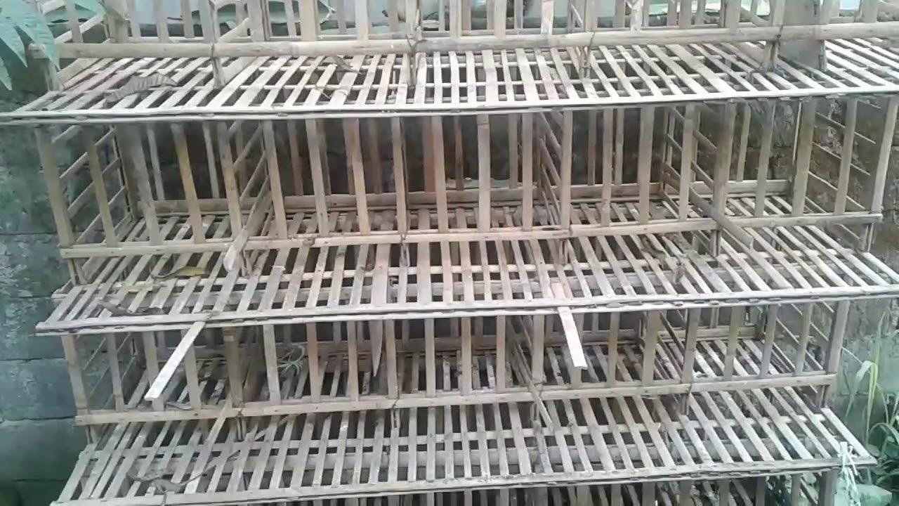 Cara Membuat Kandang Ayam Bongkar Pasang Dari Bambu ...