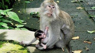 Bali Indonesië - 05 - Ubud 2 - Monkey Forrest - FOX rondreis
