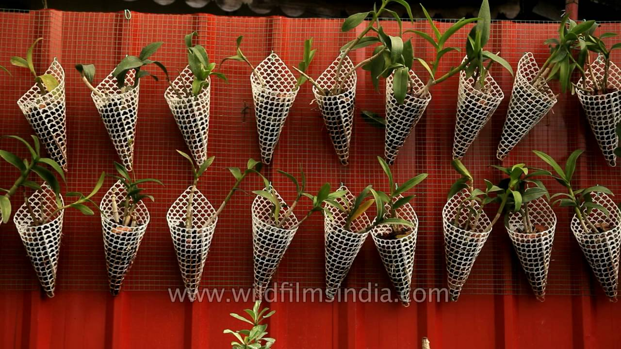 Best Plant Nursery In Kerala Bhavana