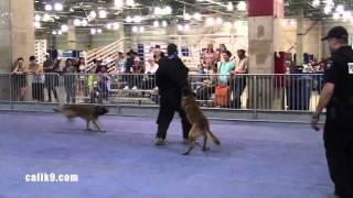 Ipo Bite Work Reel - Cali K9® Dog Training - Bay Area K9 Trainer - Bay Area Pet Expo