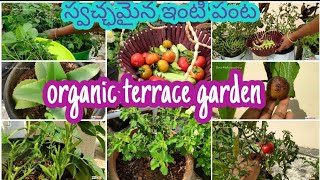 Terrace Garden | Midde Thota | Harvesting Organic Vegetables |Terrace Garden Over View | మిద్దెతోట
