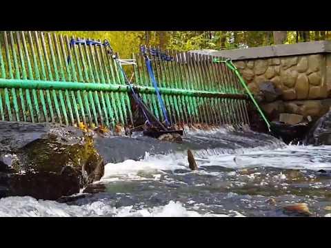 Salmon River Fish Hatchery, Altmar, NY 13303. October 08, 2017.