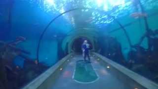 Oregon Coast Aquarium Newport, OR