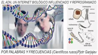 EL ADN, UN INTERNET BIOLÓGICO INFLUENCIADO Y REPROGRAMADO POR PALABRAS Y FRECUENCIAS