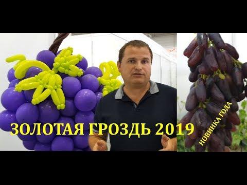ВИНОГРАДНАЯ ВЫСТАВКА ЗОЛОТАЯ ГРОЗДЬ 2019 /Золотое Гроно