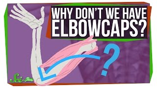 Why Don't We Have Elbowcaps?