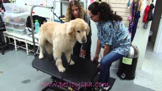 Pet Joy Spa Grooming Services | Brentwood, CA  (310) 471-0088